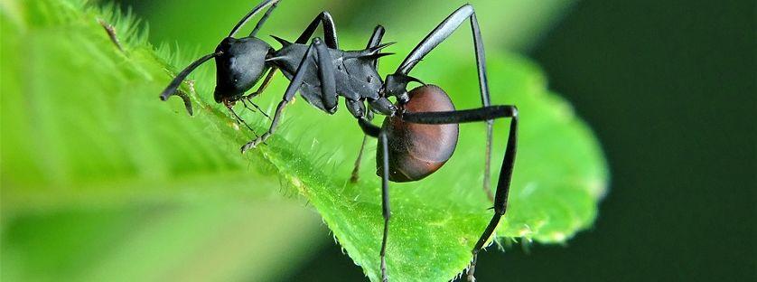 Mrówki w domu i ogrodzie – jak sobie z nimi radzić?