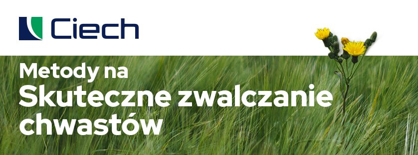 Metody na skuteczne zwalczanie chwastów - Agrosar 360 SL CIECH