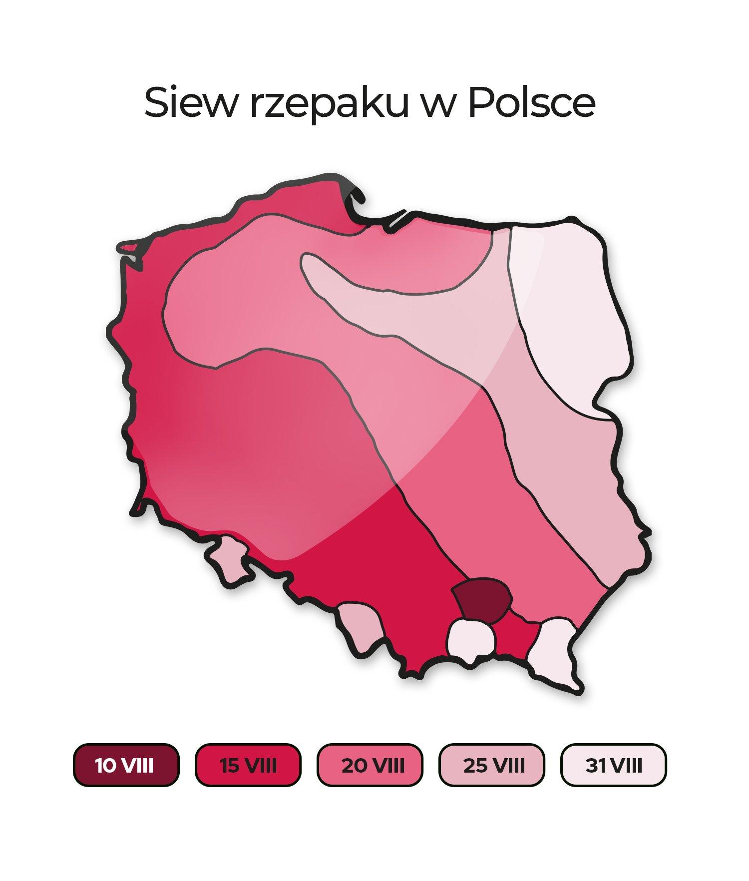 Termin siewu rzepaku ozimego w Polsce