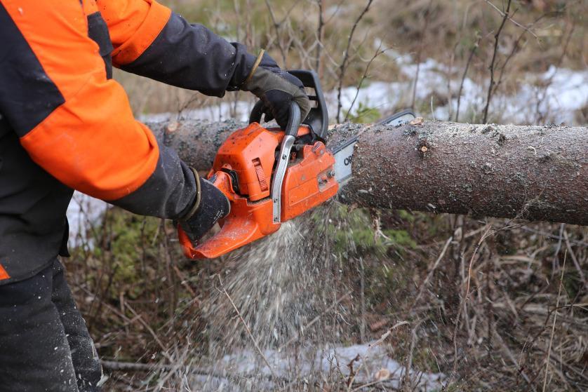 Cięcie drzewa z lasu pilarką