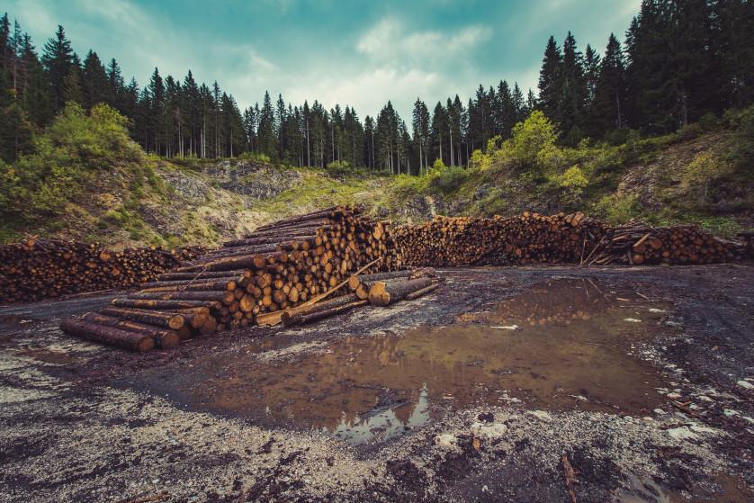 Sprzedaż drewna z lasu