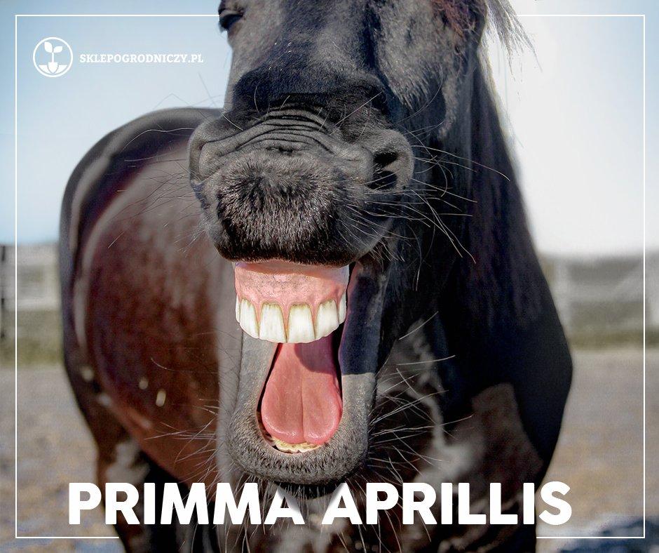 Primma apprilis